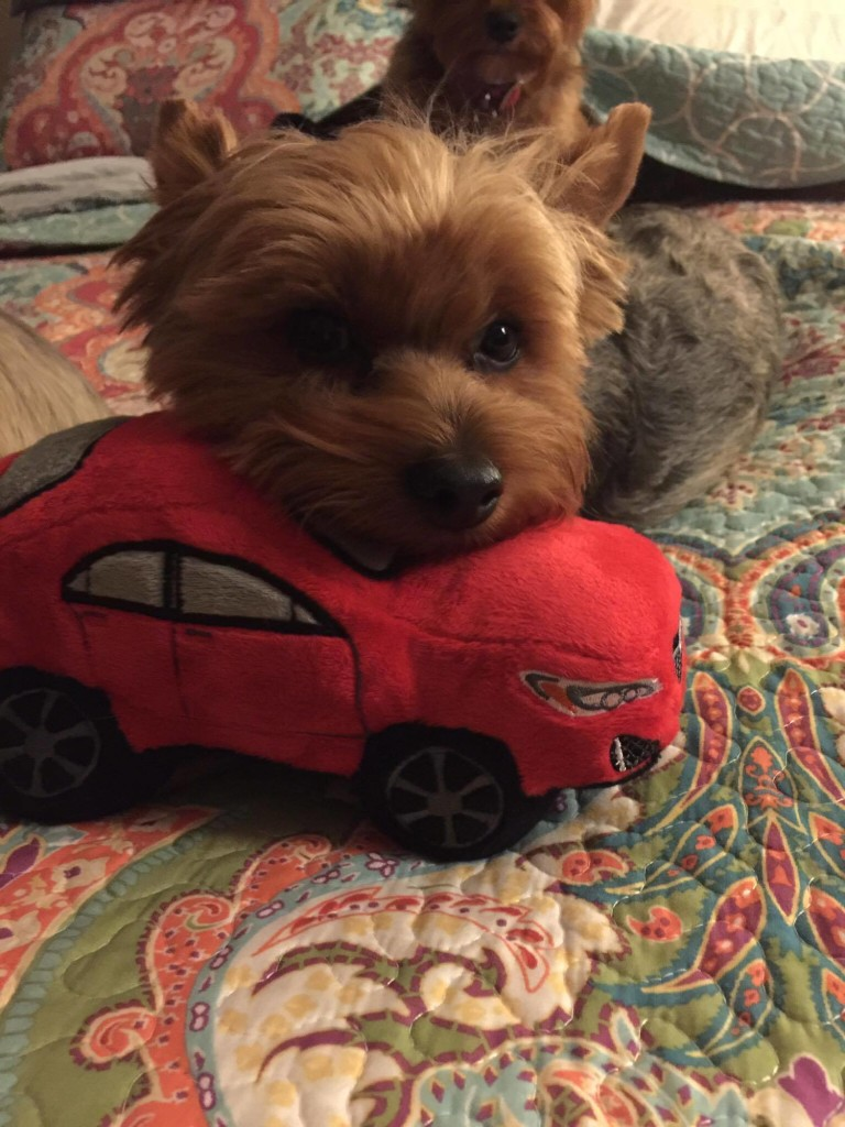 Toby and the Impreza are ready for the food drive! This cutie belongs to our Subaru of Monroeville GSM Jeff Gessler