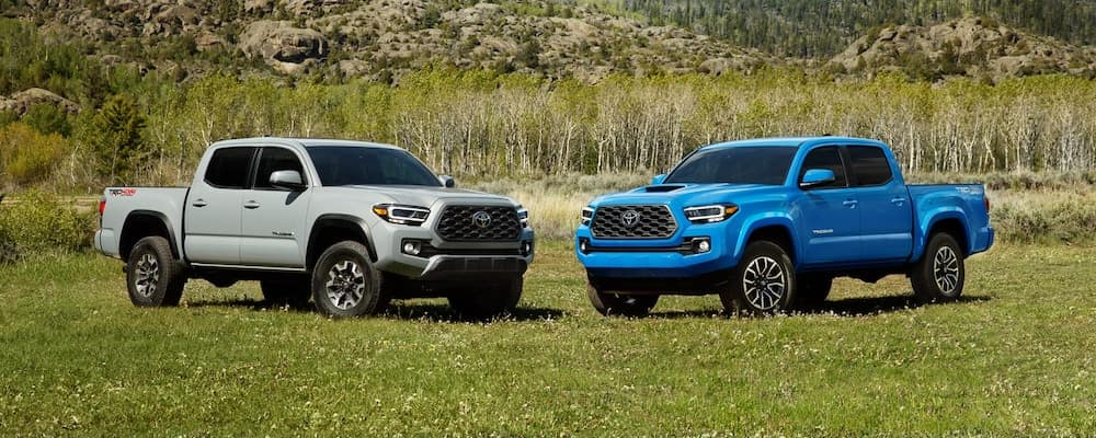 Silver and Blue Toyota Tacoma vehicles in grassy field