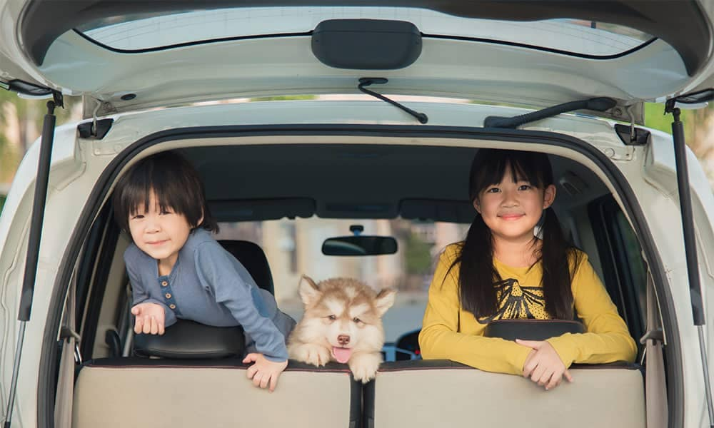 Two children in back of minivan with puppy