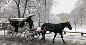Winter Horse Cariage Ride