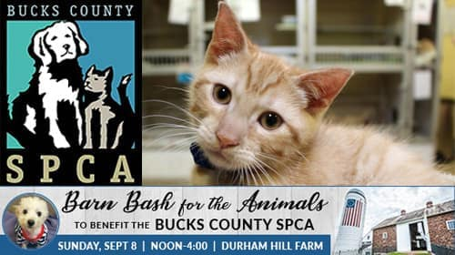 Bucks County SPCA Barn Bash 2019 at Durham Hill Farm